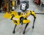 سگ های رباتیک در کارخانه فورد | عکس